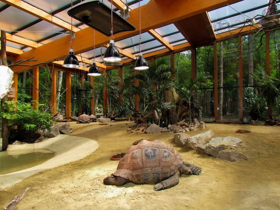 Zoo élevage de tortues
