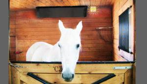 Chauffage BSH pour le secteur animalier